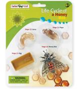 Safari Ltd Life Cycle Of A Honey Bee